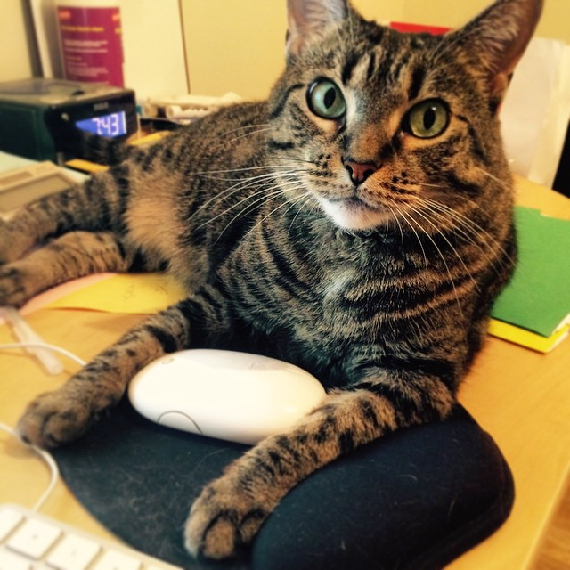 Kitty B just caught a mouse! (A.k.a. This is what I deal with while I work.)